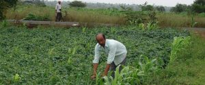 India has the highest number of organic farmers globally, but most of them are struggling